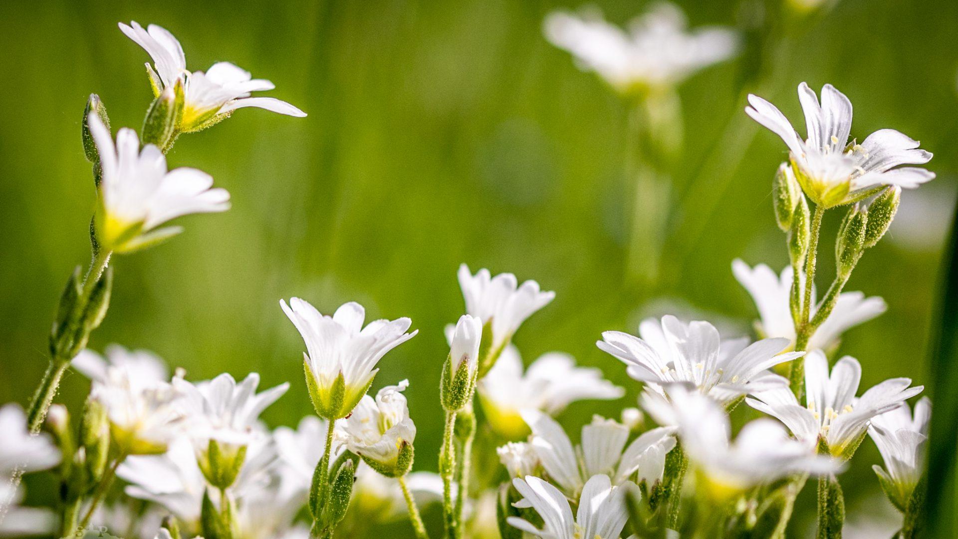 Blumen im Sonnenlicht.
